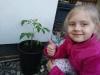 Ola-1-przesadzenie-pomidora-27.V.21r